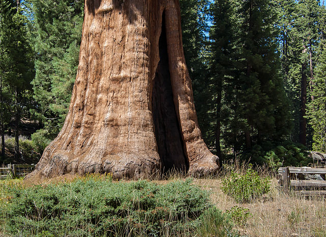 Sequoia_National_Park