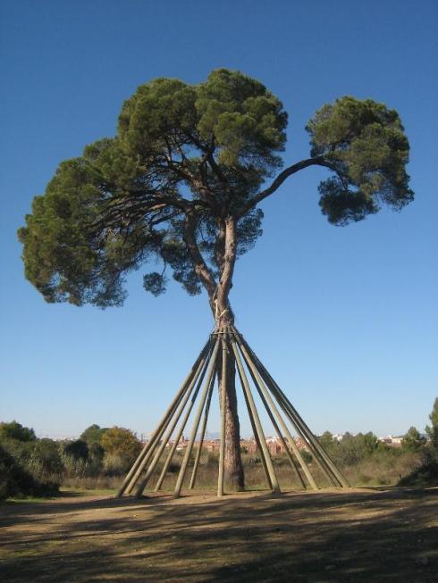el pino de xandri